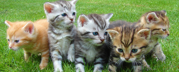 Life as a Cat Herder - Leadership vs. Management